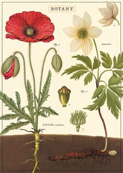 Cavallini Botany Poster