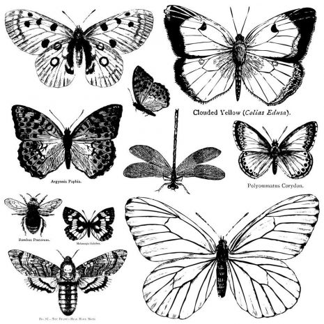 Butterfly Stamp IOD