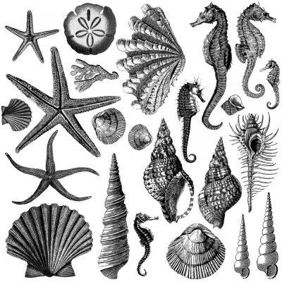 seashore iod stamp